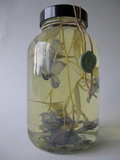 Pot van glas met bloemen er in