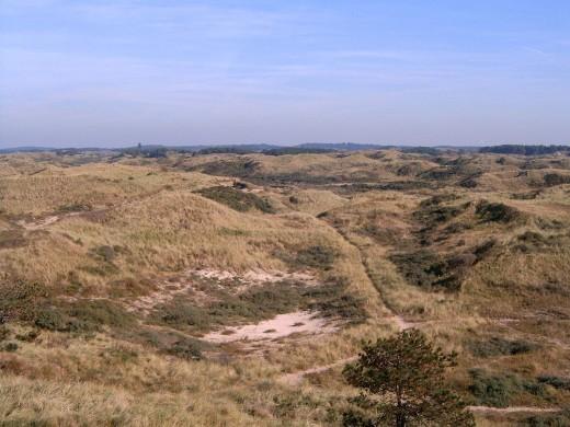 Duinlandschap in het Kennemerland