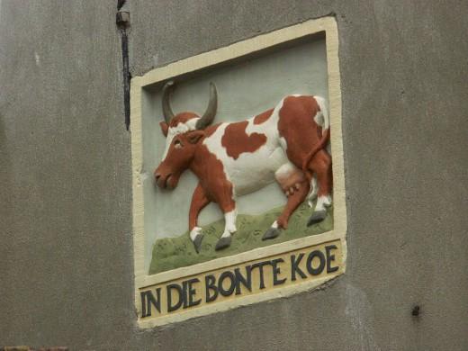 Koe, en profile, bruien en wit, achtergrond wit, olijfgroen, tekst, in die bontekoe