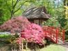 De Japanse tuin op het landgoed van Huis Clingendael